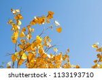 gold leaves tree for pray at... | Shutterstock . vector #1133193710