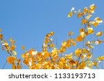 gold leaves tree for pray at... | Shutterstock . vector #1133193713