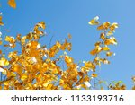 gold leaves tree for pray at... | Shutterstock . vector #1133193716