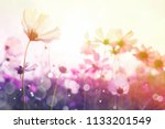 cosmos flower with bokeh at... | Shutterstock . vector #1133201549