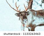 reindeer at snow winter forest... | Shutterstock . vector #1133263463