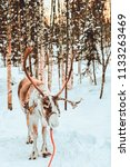 reindeer in winter snow forest... | Shutterstock . vector #1133263469