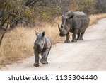 southern white rhinoceros in... | Shutterstock . vector #1133304440