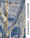 hoarfrost on tree limbs against ... | Shutterstock . vector #1133365268