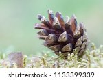 pine cone close up on a blurred ... | Shutterstock . vector #1133399339