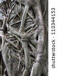 Close Up Of A Banyan Tree Trunk ...