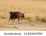 brown hyena walking in the... | Shutterstock . vector #1133445350