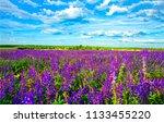 purple flowers summer meadow... | Shutterstock . vector #1133455220