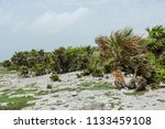 natural landscapes of the...   Shutterstock . vector #1133459108