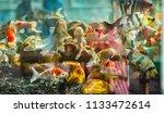 beautiful fish in an aquarium.   Shutterstock . vector #1133472614