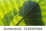 beautiful woman silhouette... | Shutterstock . vector #1133505566