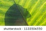 beautiful woman silhouette on a ... | Shutterstock . vector #1133506550