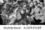 bouquet of summer flowers | Shutterstock . vector #1133519189