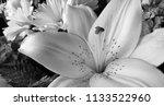 bouquet of summer flowers   lily | Shutterstock . vector #1133522960