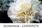 bouquet of summer flowers  ... | Shutterstock . vector #1133525273