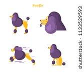 poodle flat vector illustration ...   Shutterstock .eps vector #1133529593