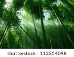 the flourish bamboo forest with ... | Shutterstock . vector #113354098