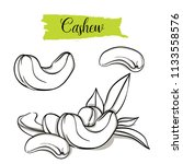 hand drawn sketch style cashew... | Shutterstock .eps vector #1133558576
