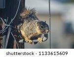 Squirrel Runs Amok On Telephone ...
