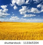 Autumn Landscape. Yellow Field...