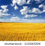 Autumn Landscape. Yellow Field...