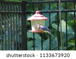 bluejay blue jay bird perched... | Shutterstock . vector #1133673920
