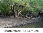 Mangrove forest on Koh Chang island, Thailand - stock photo