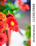 view of full blooming red...   Shutterstock . vector #1133819888