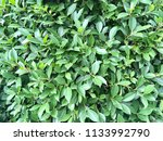green leave natural texture for ...   Shutterstock . vector #1133992790