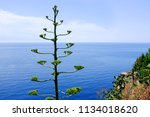 agave  why is the plant of the...   Shutterstock . vector #1134018620