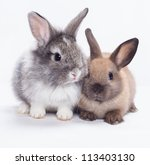 Two Rabbits Bunny Isolated On...