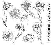 set of hand drawn sketch... | Shutterstock .eps vector #1134063593