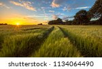 tractor track through wheat...   Shutterstock . vector #1134064490
