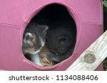 Stock photo little kittens and their pink box home 1134088406