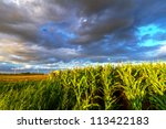 Field Of Corn With Stormy...
