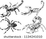 vector drawings sketches... | Shutterstock .eps vector #1134241010