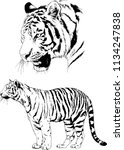 set of vector drawings on the... | Shutterstock .eps vector #1134247838