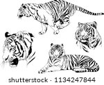 set of vector drawings on the... | Shutterstock .eps vector #1134247844