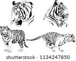 set of vector drawings on the... | Shutterstock .eps vector #1134247850