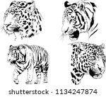 set of vector drawings on the... | Shutterstock .eps vector #1134247874