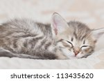 Stock photo funny kitten in carpet 113435620