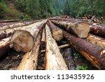 Freshly Cut Tree Logs Piled Up...