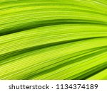 green leaf abstract background. ... | Shutterstock . vector #1134374189