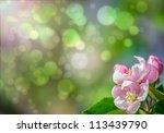 pink blossom | Shutterstock . vector #113439790