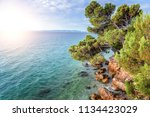 pine on the shore of the blue... | Shutterstock . vector #1134423029