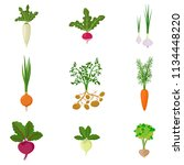 set of fresh organic vegetable... | Shutterstock .eps vector #1134448220