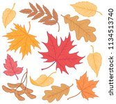 multicolor leaves of maple  oak ... | Shutterstock .eps vector #1134513740