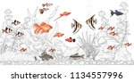 rectangular horizontal aquarium ... | Shutterstock .eps vector #1134557996