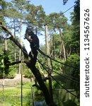 small monkey in dutch zoo | Shutterstock . vector #1134567626