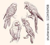 parrot set  vector llustration | Shutterstock .eps vector #113456908